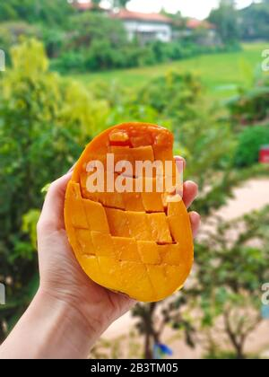 Girl holds juicy ripe sliced mango in her hand. - Stock Photo