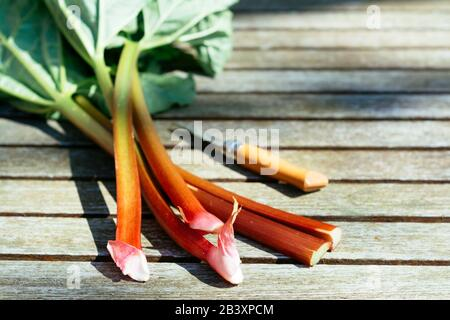 Freshly harvested rhubarb stalks on a garden table. - Stock Photo