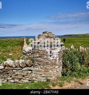 UK, Scotland, Orkney Islands is an archipelago in the Northern Isles of Scotland , Atlantic Ocean, Rural scene and cow grazing in the field at Orkney Islands , dry stone fence - Stock Photo