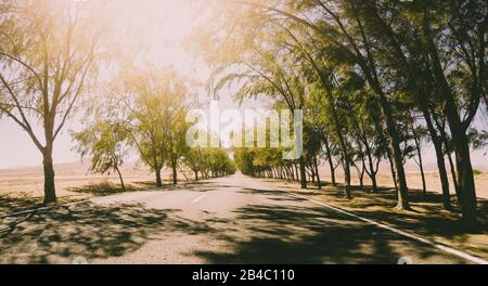Long way road vieqed from asphalt ground level with trees on the sides - infinite travel concept in sunny day - freedom and vacation feeling