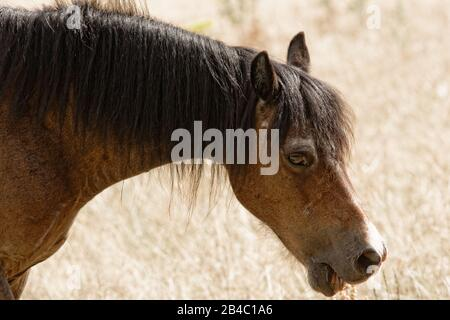 Brown horse taking it easy on a hot summer's day - Stock Photo
