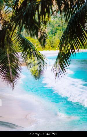 Palm tree leaves on beautiful tropical paradise Anse intendance beach. Ocean wave roll on sandy beach with coconut palm trees. Mahe, Seychelles.