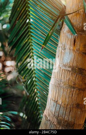 Beautiful palm trees at the beach on the paradise islands Seychelles. Shallow deep field - Bokeh