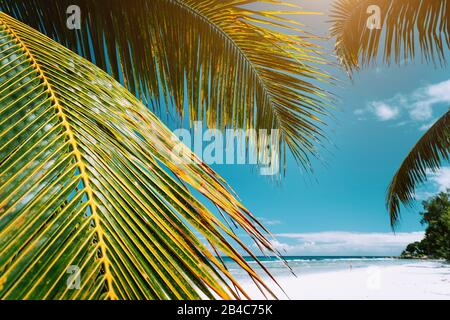 Palm tree leaves on tropical paradise beach Anse Cocos, La Digue, Seychelles.