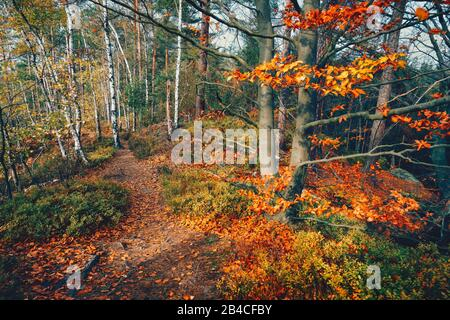 Hiking path trail in the beautiful autumn forest with golden colored trees and colorful foliage on sunny day. - Stock Photo