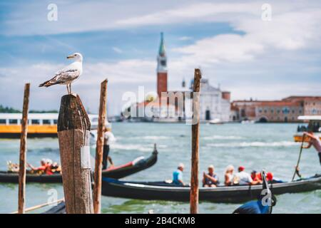 Scenic view of blurred Venice panorama of Venice's embankment with seagull in front. Most popular touristic attraction, summer city trip vacation in Italy. - Stock Photo
