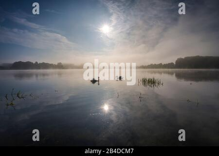 Swans in the back light of the rising sun, sunrise and reflecting colored clouds in the lake, fog over the water, rising sun with peeling fog, sun breaking through on a spring day - Stock Photo