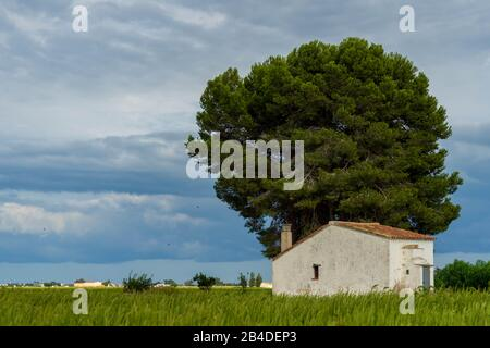 A Caretaker's Hut in the Rice Fields of Ebro River Delta - Stock Photo
