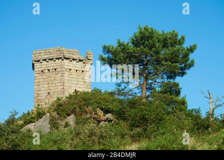 Ruin on Mount Jizkibel next to a black pine (Pinus nigra) on the Way of St. james near Hondarribia, Basque Country, Spain - Stock Photo