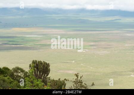 A foot, tent and jeep safari through northern Tanzania at the end of the rainy season in May. National Parks Serengeti, Ngorongoro Crater, Tarangire, Arusha and Lake Manyara. View from the crater rim Ngorongoro - Stock Photo