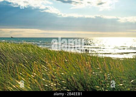 Germany, Mecklenburg-Western Pomerania, Ahrenshoop, view over the dune grass to the evening with last rays of sunshine on the Baltic Sea beach, Baltic Sea with groynes blurred in the background - Stock Photo