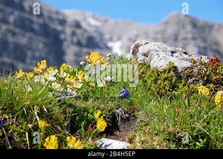 Warscheneck in the dead mountains - Stock Photo