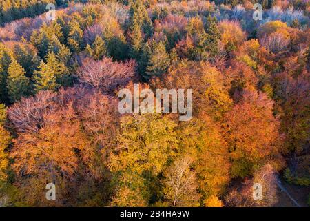 autumnal mixed forest, near Münsing, drone reception, Upper Bavaria, Bavaria, Germany - Stock Photo