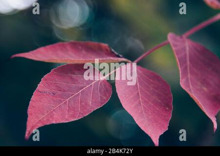 autumnal leaves, close-up - Stock Photo
