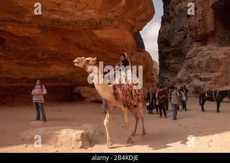 Jordan, Petra, a Bedouin boy sits on a dromedary in the rock city Petra. - Stock Photo