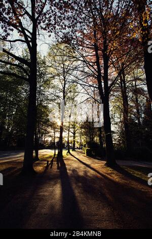 Autumn trees in the park at sunset - Stock Photo