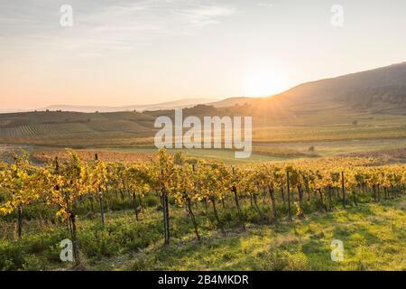Sonnenuntergang über dem Weinanbaugebiet zwischen Gumpoldskirchen und Pfaffstätten, Niederösterreich, Österreich - Stock Photo