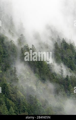 Fog and clouds on a forested mountain slope in the Karwendel