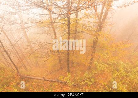 Autumn trees photographed from above in fog - Stock Photo