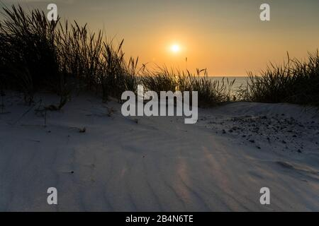 Baltic Sea with golden yellow beach grass in the sunlight, summer on the Baltic Sea and grasses on the beach, beautiful clouds on the beach of the Baltic Sea, long shadow of the beach grass on the dune - Stock Photo