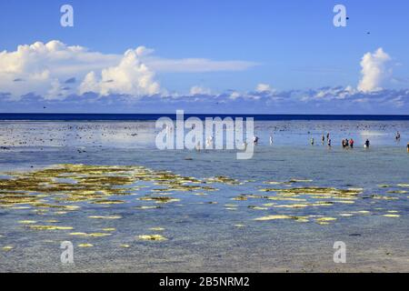 People out walking on reef flat at low tide with many bleached corals evident, Heron Island, Great Barrier Reef, Queensland, Australia, March 2020 - Stock Photo
