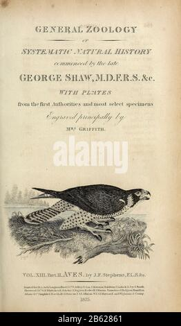 from volume XIII (Aves) Part 2, of 'General Zoology or Systematic Natural History' by British naturalist George Shaw (1751-1813). Griffith, Mrs., engraver. Heath, Charles, 1785-1848, engraver. Stephens, James Francis, 1792-1853 Published in London in 1825 by G. Kearsley - Stock Photo