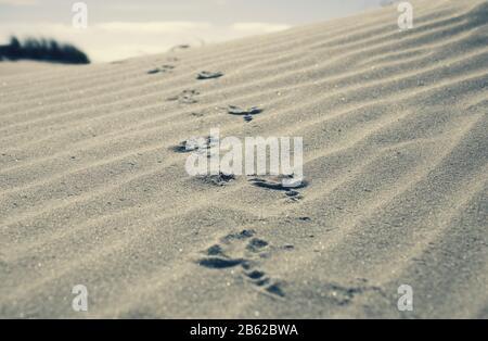 bird footprints on a sandy beach