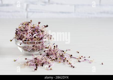 Sprouts of red cabbage in glass bowl on white wooden table. Sprouted seeds. Detox. Healthy eating concept. Stock Photo