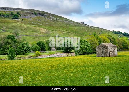Traditional stone barn in hay meadow, upper Swaledale, Yorkshire Dales National Park, England, UK