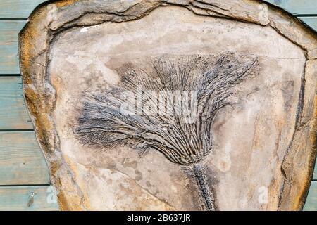 The fossil of an ancient plant, the concept of extinct forms of life - Stock Photo