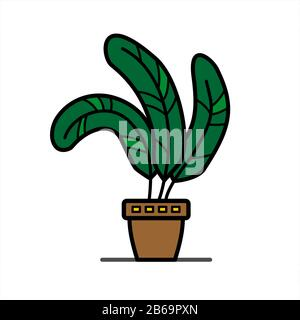 plant with wide leaves in a clay flower pot; home tropical herb; isolated on a white background