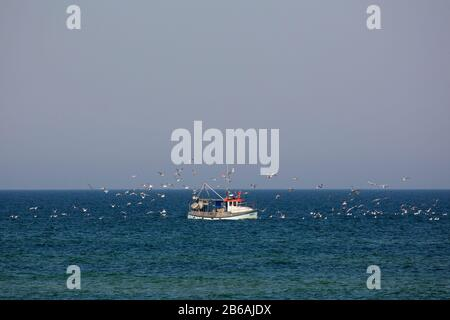 Fishing boat / cutter sailing on the Baltic Sea and followed by flock of seagulls, Mecklenburg Western Pomerania, Germany