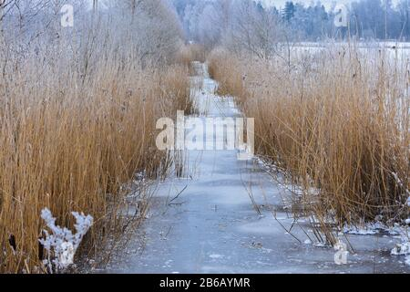 Frozen drainage ditch with reeds on sides in winter - Stock Photo