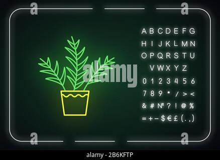 Parlor palm neon light icon. Chamaedorea elegans. Neanthe bella palm. Indoor tropical plant. Outer glowing effect. Sign with alphabet, numbers and Stock Photo