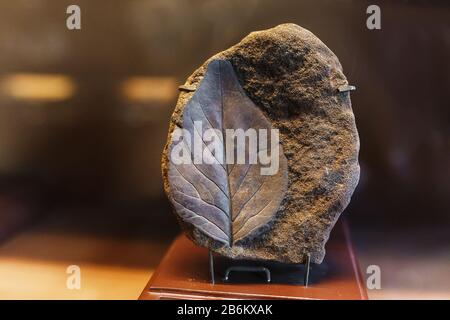 Ancient Leaf fossil imprint in stone - Stock Photo
