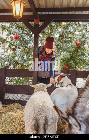 Woman feeding animals at an open Christmas zoo at a fair in Prague - Stock Photo