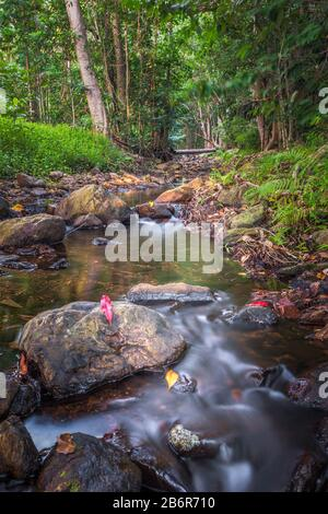 Low viewpoint of a lush and pristine stream flowing through tropical rainforest ecosystem in Far North Queensland, Australia. - Stock Photo