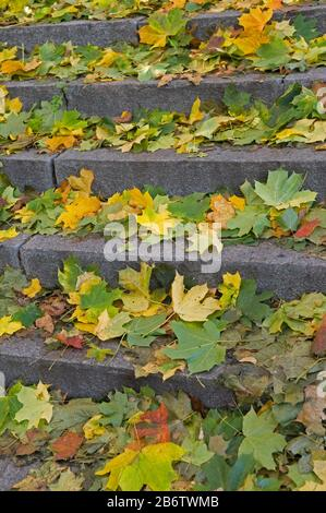 Stone stairs covered with yellow, red and green leaves. Autumn season. - Stock Photo