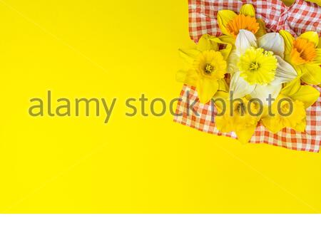 Daffodills compisition on bright yellow background, easter festive basket, flowers on red and white cloth, white daffodill in the middle, copy space - Stock Photo