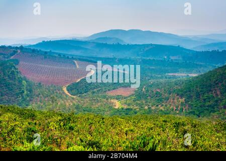Rolling hills and coffee plantations in Central Highlands, Bao Loc, Lam Dong Province, Vietnam - Stock Photo