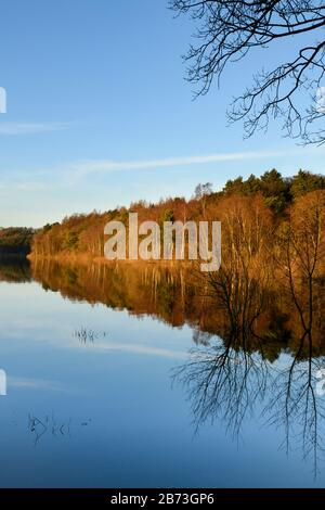 Beautiful scenic landscape (woodland trees, bright autumn colour & blue sky reflected on still calm water) - Fewston Reservoir, Yorkshire, England, UK