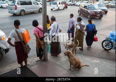 26.01.2017, Yangon, Yangon Region, Republic of the Union of Myanmar, Asia - Pedestrians wait at Strand Road to cross the road. [automated translation] - Stock Photo