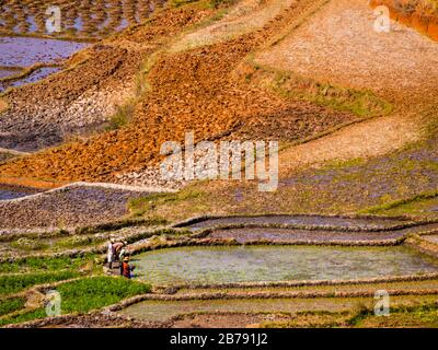 Multicolored rice paddy fields in the highlands of Madagascar