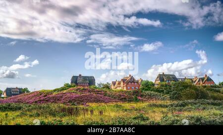 Blooming heather and thatched cottages in the dunes. Panorama landscape on the island of Sylt, North Frisian Islands, Germany. Hdr art photography.