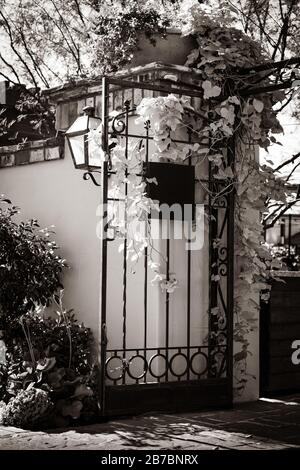 lovely landscaped entrance to courtyard surrounded by Spanish brick and stucco wall with iron gate loaded with climbing ivy, in sepia - Stock Photo