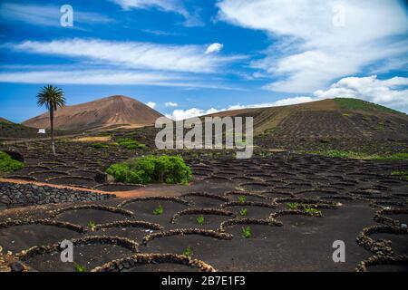 Volcanic landscape in Lanzarote island. Vineyards of La Geria. Canary Islands.Spain. - Stock Photo