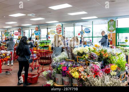 Reston, USA - March 13, 2020: Long lines in Trader Joe's store with people by shopping cart buying grocery products, paying at cashier registers in pr - Stock Photo