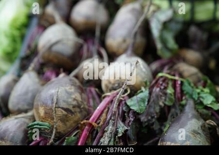 Organic beet on turkish market - Stock Photo