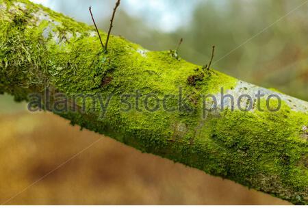 Green Moss On Tree Branch - Stock Photo