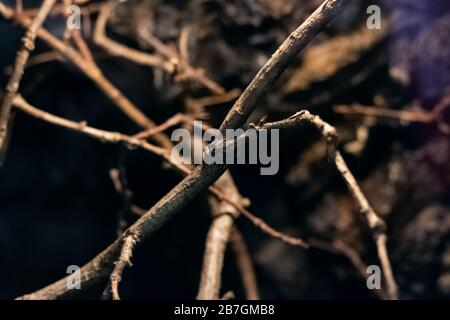 Dry tree branches in a terrarium for spiders - Stock Photo